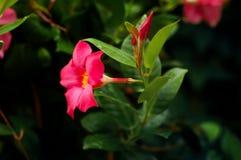 πλανήτης λουλουδιών Στοκ εικόνες με δικαίωμα ελεύθερης χρήσης