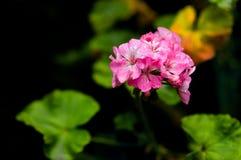 πλανήτης λουλουδιών Στοκ Εικόνα