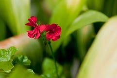πλανήτης λουλουδιών Στοκ φωτογραφία με δικαίωμα ελεύθερης χρήσης