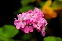 πλανήτης λουλουδιών Στοκ φωτογραφίες με δικαίωμα ελεύθερης χρήσης
