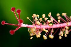 πλανήτης λουλουδιών Στοκ εικόνα με δικαίωμα ελεύθερης χρήσης