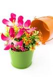 Πλαστά λουλούδια για την εσωτερική διακόσμηση Στοκ φωτογραφίες με δικαίωμα ελεύθερης χρήσης
