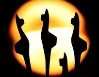 Πλαστά Llamas Στοκ Φωτογραφίες