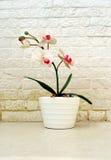 Πλαστικό λουλούδι μπροστά από έναν άσπρο τοίχο τούβλων Στοκ Φωτογραφίες