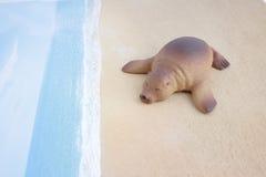 Πλαστικό παιχνίδι λιονταριών θάλασσας με τον αριθμό Στοκ φωτογραφίες με δικαίωμα ελεύθερης χρήσης