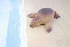 Πλαστικό παιχνίδι λιονταριών θάλασσας με τον αριθμό Στοκ Φωτογραφία
