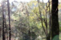 Πλεκτός ιστός αράχνης το πρωί Στοκ Φωτογραφίες
