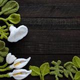 Πλεκτό πράσινο φύλλο και άσπρο υπόβαθρο λουλουδιών Στοκ Φωτογραφίες