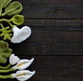 Πλεκτό πράσινο φύλλο και άσπρο υπόβαθρο λουλουδιών Στοκ Εικόνα