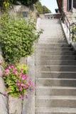 Πλευρά βημάτων των λουλουδιών Στοκ Φωτογραφία