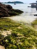 Πλευρά νερού Στοκ Εικόνες