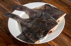 Πλευρονήκτης ακατέργαστων ψαριών, πλευρονήκτες στο ξύλο Στοκ Εικόνες