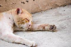 Πληγωμένη γάτα οδών Στοκ φωτογραφίες με δικαίωμα ελεύθερης χρήσης