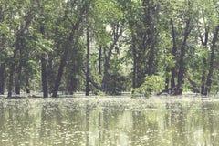 πλημμυρισμένα δέντρα Στοκ Εικόνα