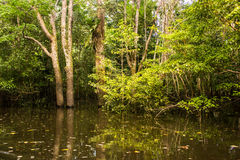 Πλημμυρισμένη ζούγκλα στον ποταμό της Αμαζώνας στοκ φωτογραφία
