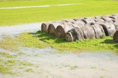Πλημμυρισμένοι τομείς με τα υγρά δέματα σανού μετά από τη καταρρακτώδη βροχή Στοκ εικόνα με δικαίωμα ελεύθερης χρήσης