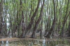 πλημμυρισμένο δάσος Στοκ Φωτογραφίες