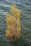 Πλημμυρισμένο δέντρο στο έλος Στοκ Εικόνες