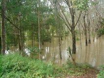 Πλημμυρισμένο νερό χωριό στην περιοχή Si nakhon thammarat Στοκ Εικόνα