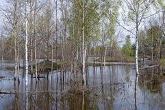 Πλημμύρα άνοιξη Στοκ Φωτογραφία
