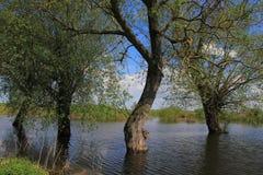 Πλημμύρα άνοιξη Στοκ φωτογραφία με δικαίωμα ελεύθερης χρήσης