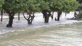 Πλημμύρα, ροή του νερού πέρα από το δρόμο απόθεμα βίντεο
