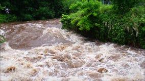 Πλημμύρα στο Alb σε Ettlingen απόθεμα βίντεο