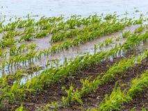 Πλημμύρα 2013 στοκ εικόνες