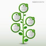 Πληροφορίες χρονικών γραμμών γραφικές με το αφηρημένο πρότυπο δέντρων σχεδίου πράσινο ελεύθερη απεικόνιση δικαιώματος