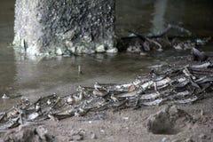 Πλοίαρχοι λάσπης Στοκ Εικόνα
