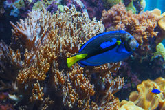Πλοκάμια ενός ρόδινου anemone θάλασσας Στοκ εικόνα με δικαίωμα ελεύθερης χρήσης