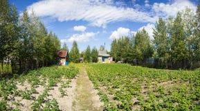 Πλοκή κήπων με τις πατάτες Στοκ εικόνα με δικαίωμα ελεύθερης χρήσης