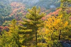 Πλούσια χρώματα των δέντρων πτώσης σε μια βουνοπλαγιά Στοκ Φωτογραφίες