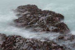 Πλύσιμο κυμάτων πέρα από καλυμμένους τους φύκι βράχους Στοκ φωτογραφία με δικαίωμα ελεύθερης χρήσης