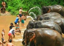 Πλύσιμο τουριστών και καθαροί ελέφαντες Στοκ Εικόνες