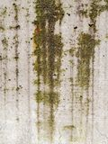 Ράβδωση βρύου και φορμών κάτω από έναν συμπαγή τοίχο στοκ φωτογραφίες με δικαίωμα ελεύθερης χρήσης