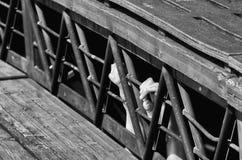 ράβδοι πίσω Στοκ φωτογραφία με δικαίωμα ελεύθερης χρήσης