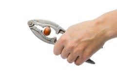 Ράγισμα του καρυδιού στοκ φωτογραφία με δικαίωμα ελεύθερης χρήσης