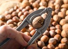 Ράγισμα του ξύλου καρυδιάς που χρησιμοποιεί την κροτίδα καρυδιών στοκ εικόνες με δικαίωμα ελεύθερης χρήσης