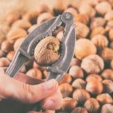 Ράγισμα του ξύλου καρυδιάς που χρησιμοποιεί την κροτίδα καρυδιών στοκ εικόνες