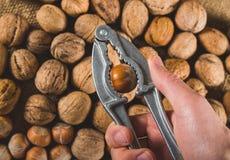 Ράγισμα του φουντουκιού που χρησιμοποιεί την κροτίδα καρυδιών στοκ εικόνα με δικαίωμα ελεύθερης χρήσης