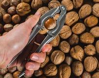 Ράγισμα του φουντουκιού που χρησιμοποιεί την κροτίδα καρυδιών στοκ φωτογραφία