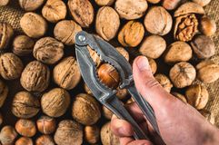 Ράγισμα του φουντουκιού που χρησιμοποιεί την κροτίδα καρυδιών στοκ εικόνες με δικαίωμα ελεύθερης χρήσης