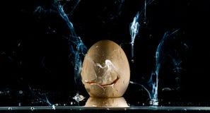 Ράντισμα αυγών Στοκ εικόνες με δικαίωμα ελεύθερης χρήσης