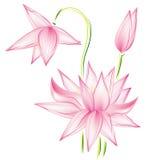 Ράστερ λωτού λουλουδιών διανυσματική απεικόνιση