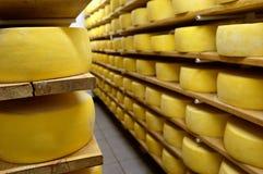 ράφια τυριών στοκ φωτογραφία με δικαίωμα ελεύθερης χρήσης