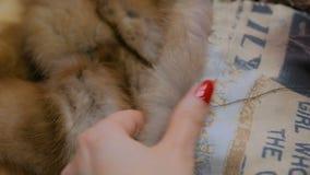 Ράφτης που επισκευάζει το παλτό γουνών απόθεμα βίντεο