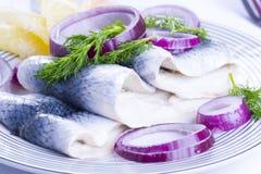Ρέγγες σε ένα πιάτο Στοκ εικόνα με δικαίωμα ελεύθερης χρήσης