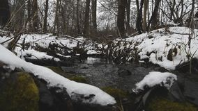 Ρέοντας δάσος χειμερινών ρευμάτων απόθεμα βίντεο