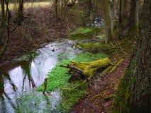 Ρέοντας νερό στο δάσος στοκ εικόνες